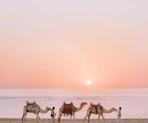travel, egypt, and camel image