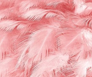 pink, wallpaper, and feather image