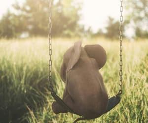 animal, sad, and swing image