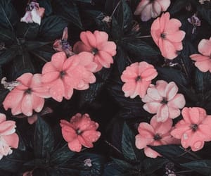 fade, faded, and flower image