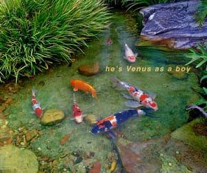 bjork, boy, and fish image