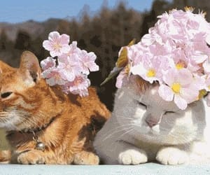 cat, gif, and flowers image