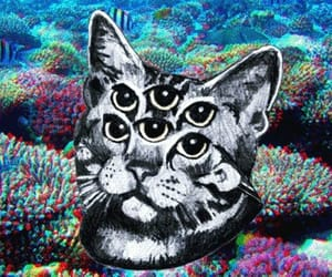 cat, trippy, and eyes image