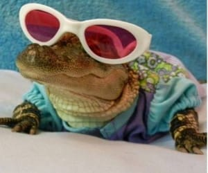 alligators, sunglasses, and swag image