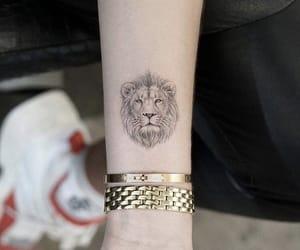 animal, lion, and small image