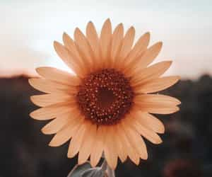 art, photography, and sunflowers image