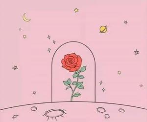 wallpaper, rose, and beautiful image
