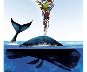 whale and animal image