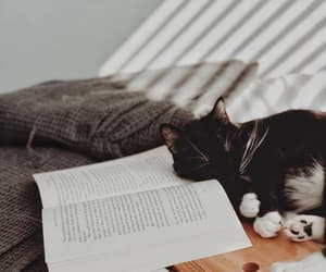book, cat, and pet image