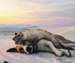 cat, dog, and hug image