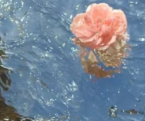 flowers and water image