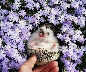 animal, flowers, and purple image