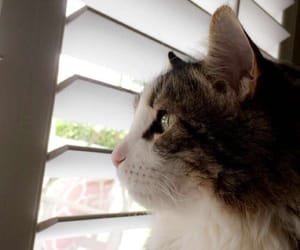 calico, cat, and pretty image