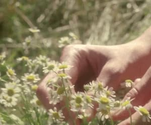 flowers, white and green, and hands gif image