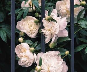 white, aesthetics, and flowers image