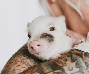 animals, baby, and pig image