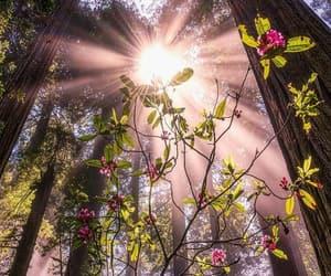 nature, photography, and صباح الخير image