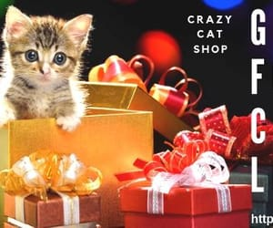 cat shop, gifts for cat lovers, and presents for cat lovers image