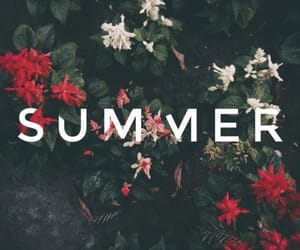 flowers, wallpapers, and summer image