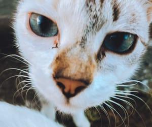 Animais, autoral, and cat image