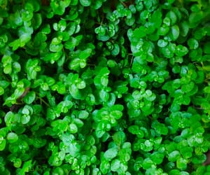 green, plants, and verde image