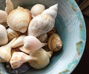 shells, sea, and seashells image