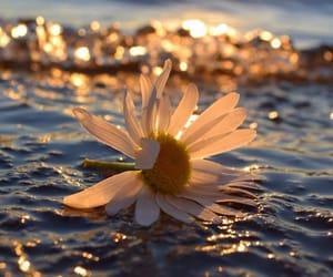 beautiful, hope, and love image