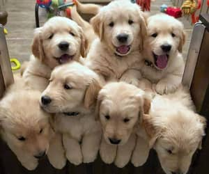 puppy, dog dogs, and pet pets image