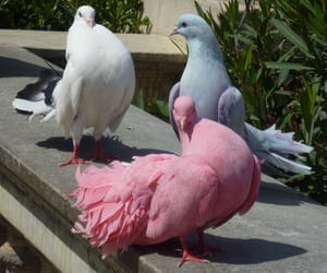 pink, bird, and blue image