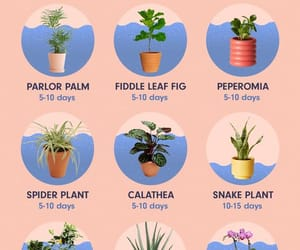 cactus, quotes, and tips image