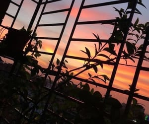 sunset, sky, and plants image