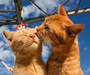 cat, animal, and kiss image