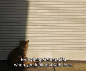 beautiful, quote, and cat image