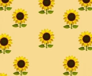 sunflower, wallpaper, and summer image