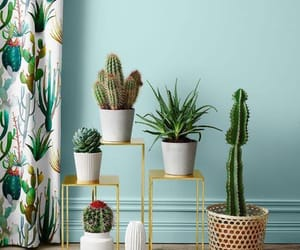 cactus, decor, and green image