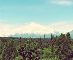 aesthetic, denali, and forest image