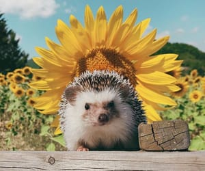 animal, cute, and sunflower image