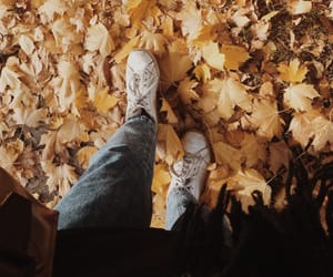 fall, leaves, and yellow image