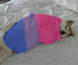dog, bissexual, and bi image