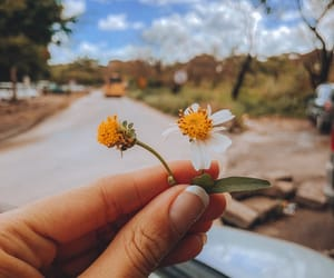 bloom, flowers, and inspiration image