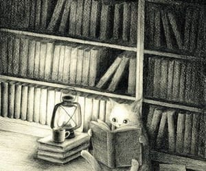 book, cat, and night image