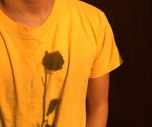 yellow, aesthetic, and flower image