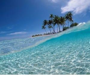 fish, beach, and sea image