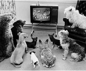cartoon, tom & jerry, and funny dog image