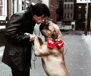 dog, rocky, and Rocky Balboa image