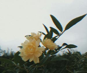 aesthetic, black, and flower image