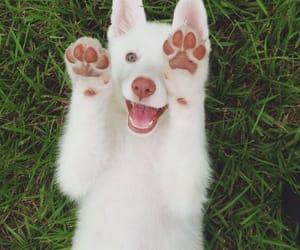 animals, blue eyes, and lovely image