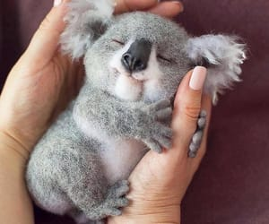 animal, Koala, and cute image