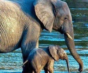 elephant, animal, and cute image