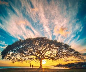 tree, nature, and sunset image